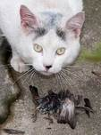 Feral cat and bird