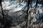 Kettle pond reflection at dusk