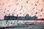 Shorebirds at dusk