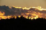 Dawn scenic silhouette with bald eagle