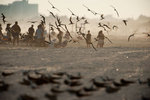 Co-existence: Black skimmers and bathers on beach