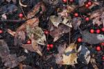 Woodland floor with leaves and American holly berries