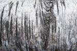 Birch Bark Pattern #6
