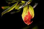October leaf transition