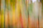 Autumn foliage abstract