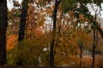 yellow fall foliage in November rain