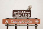 Snowy owl and sign