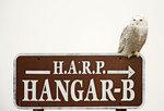 Snowy owl on sign