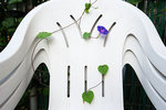 Morning glory and garden chairs