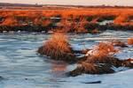 Winter salt marsh vegetation in late light