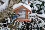 Backyard feeder with blue jay