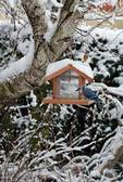Backyard bird feeder with blue jay