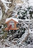 Backyard bird feeder with cardinal