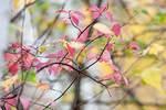 November pastel foliage