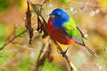 Celebrity painted bunting in Brooklyn's Prospect Park