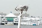 Osprey platform in winter