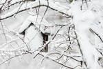 Birdhouse after winter snowfall