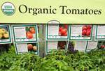 Organic tomato  plants for sale at garden center
