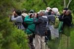 Birders in May looking for migrating spring songbirds