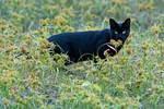 Feral cat in autumn