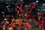 Mid-November second growth foliage