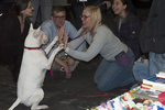 Bull terrier at Westminster dog show, pure bred dogs, people and animals,