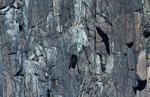 Basalt cliffs with turkey vulture and shadow