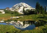 MOUNT RAINIER, SPRAY PARK REFLECTION