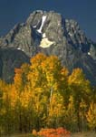 MOUNT MORAN WITH ASPEN GROVE